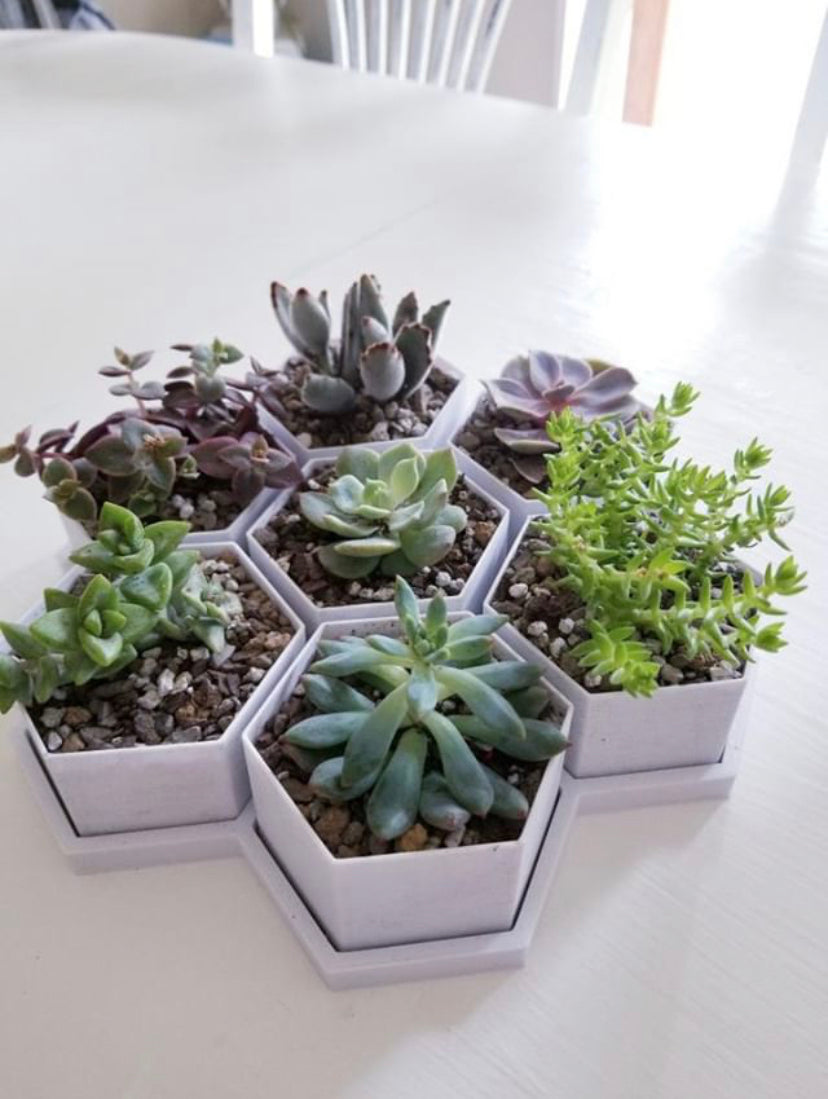 HoneyComb 3D Printed BioPots™️ (set of 7) with Drainage & Saucer - Succulent Plant Pot