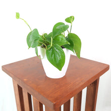 "Medium Heartleaf Philodendron (Philodendron Cordatum) in 4"" 3D Printed BioPot™"