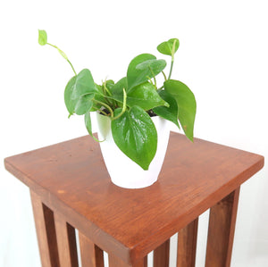 Heartleaf Philodendron - Live Air Purifying Plant in 3D Printed BioPot