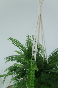 "32"" Cotton Macrame Plant Hanger for 4-8"" Pots"