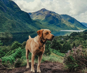 Top tips for exploring with your dog