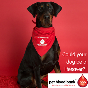 World Blood Donor Day - an interview with a doggy blood donor!