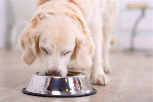 Simple measures to help avoid pet obesity
