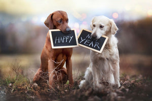 New Year resolutions for you and your pet
