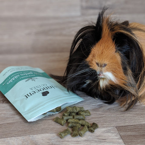 Everything Guinea Pig Innocent Guinea treats review