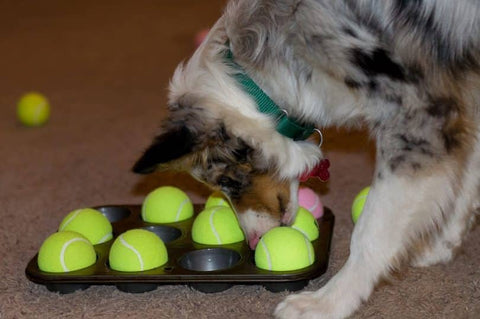 Canine enrichment | Healthy Dog Treats