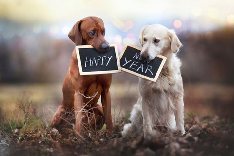 New Year Resolutions with your pet | The Innocent Hound