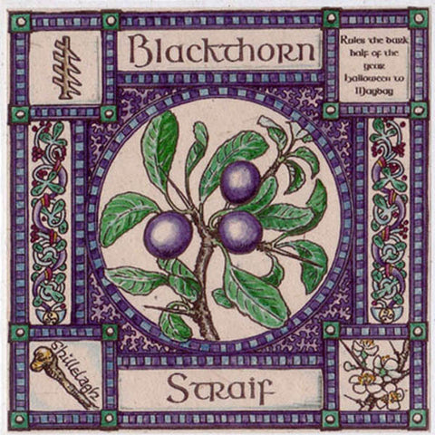 BLACKTHORN TREE GREETING CARD Halloween - May Day CELTIC PAGAN Ogham HEDINGHAM FAIR