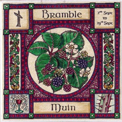 BRAMBLE TREE GREETING CARD 2nd Sept-29th Sept CELTIC PAGAN Ogham HEDINGHAM FAIR