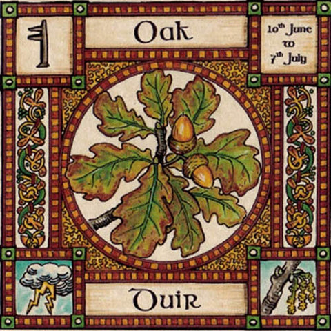 OAK TREE GREETING CARD 10th Jun - 7th Jul CELTIC PAGAN Ogham HEDINGHAM FAIR
