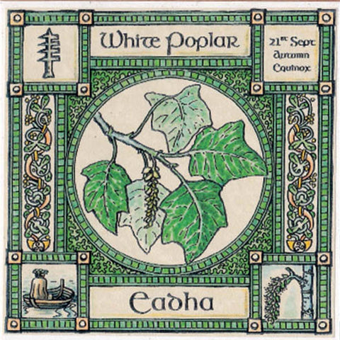 AUTUMN EQUINOX WHITE POPLAR TREE 21st Sept CELTIC PAGAN Ogham HEDINGHAM FAIR