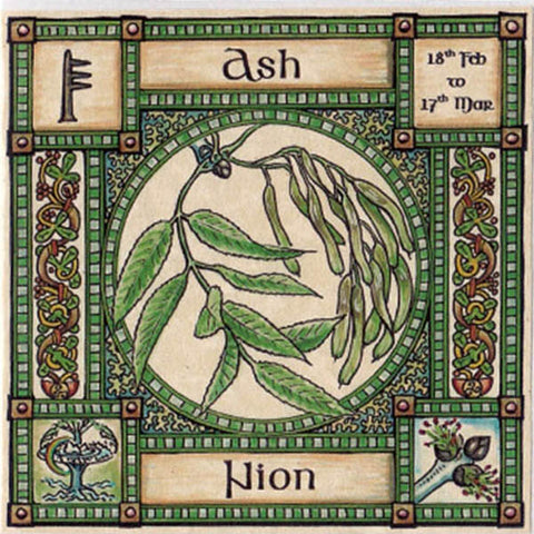 ASH TREE GREETING CARD 18th Feb - 17th Mar CELTIC PAGAN Ogham HEDINGHAM FAIR