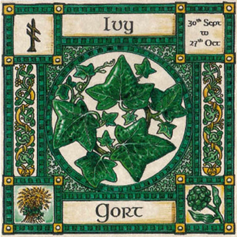 IVY TREE GREETING CARD 30th Sept - 27th Oct CELTIC PAGAN Ogham HEDINGHAM FAIR