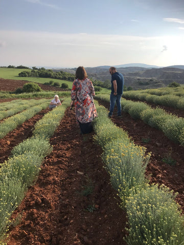 Sourcing the finest quality helichrysum italicum essential oil, grown by Vessel Essential Oils