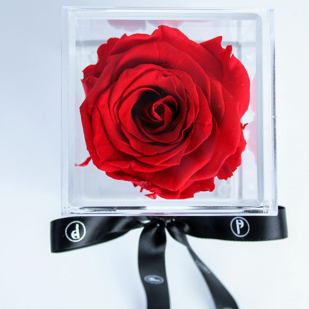 "Preserved Single Rose that Lasts a Year ""The Chloe Box"" - Delivery in Arlington Only"