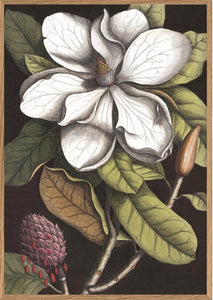 "Blooming White Magnolia 46"" X 64"" Wall Art"