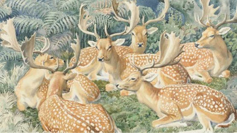 Illustration by Charles Frederick Tunnicliffe where we see many fawns.