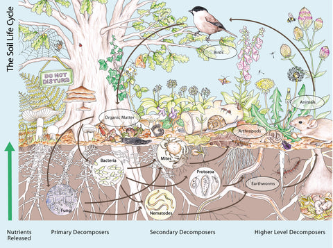 Illustration by Emma Lawrence that explains through images the functioning of an ecosystem.