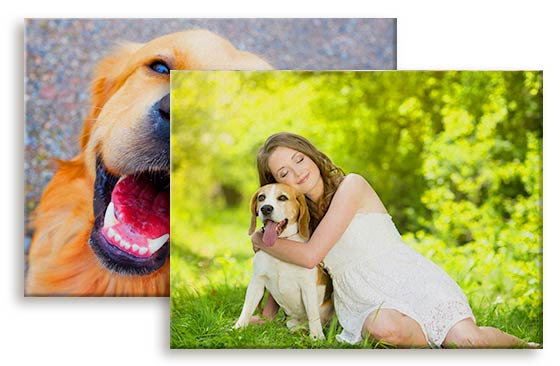"2 Photo Canvases - 16"" x 12""