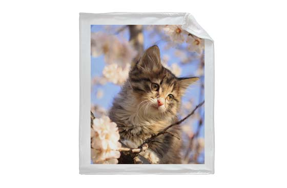 Custom Cat Blankets|77|Clearance
