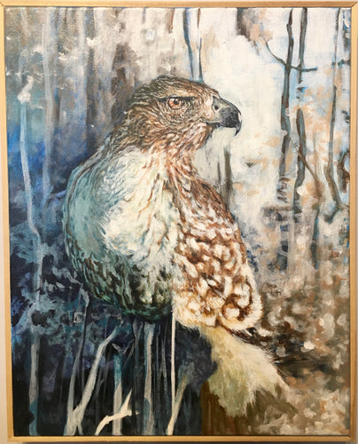 Red Tail Hawk Study
