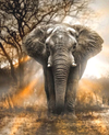 Elephant of Savannah - Diamond Painting Kit
