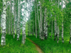 Green Forest - Diamond Painting Kit