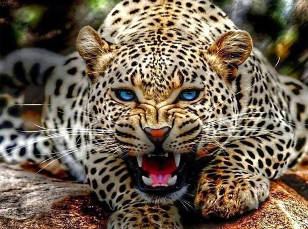 Leopard Growl - Diamond Painting Kit