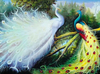 Peacocks - Diamond Painting Kit