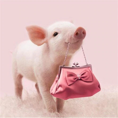 Pink Pig and Purse - Diamond Painting Kit