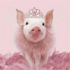 Pink Pig in Tiara - Diamond Painting Kit