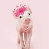 Pink Pig with Pearls - Diamond Painting Kit