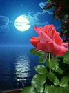 Rose Under Lotus Moon - Diamond Painting Kit