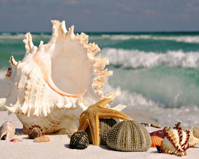 Sea Shells - Diamond Painting Kit