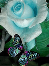 Aqua Butterfly on Aqua Rose - Paint By Numbers Kit
