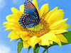 Butterfly on Sunflower - Diamond Painting Kit