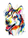 Colorful Husky Dog - Diamond Painting Kit