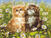 Cuddly Kittens - Paint By Numbers Kit