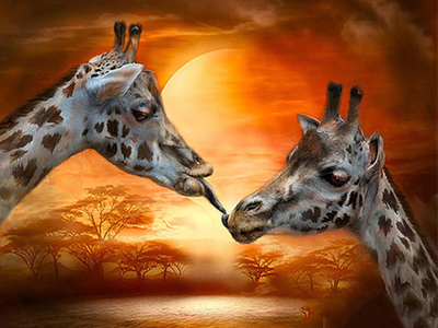 Giraffe Kiss - Paint By Numbers Kit