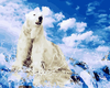 Polar Bear - Paint By Numbers Kit
