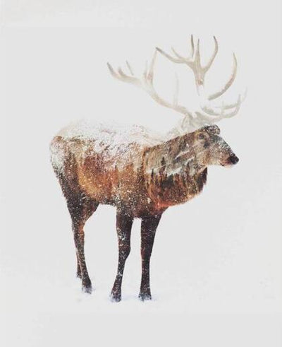 Winter Bulk Elk - Paint By Numbers Kit