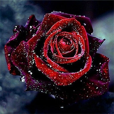 Rich Red Rose - Diamond Painting Kit