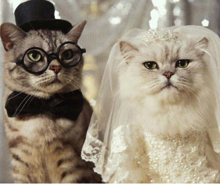 Wedding Cats - Diamond Painting Kit
