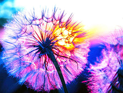 Dandelion Wish - Diamond Painting Kit