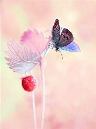 Butterfly on Raspberry Bush - Paint By Numbers Kit