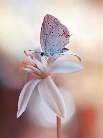 Butterfly on White Flower - Paint By Numbers Kit