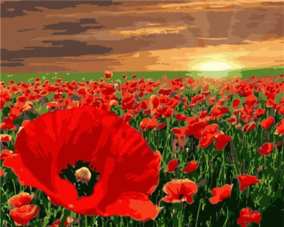 Poppy Field - Paint By Numbers Kit
