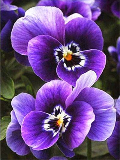 Spring Flowers 1 - Diamond Painting Kit