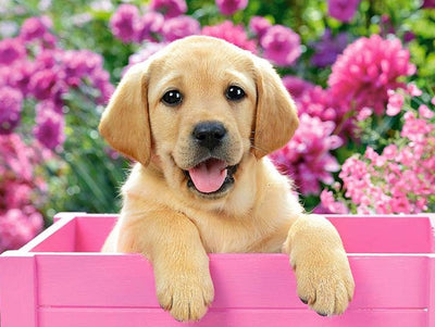 Golden Lab Puppy in Springtime Box - Diamond Painting Kit