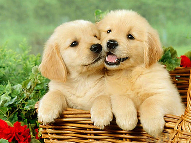 Little Golden Retrievers in a Basket - Diamond Painting Kit